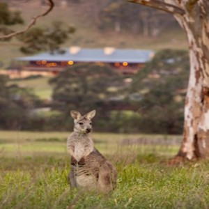 emirates-one-only-wolgan-valley-australia-honeymoon-packages-local-wildlife