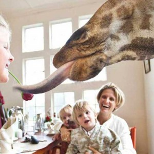 family-experiences-giraffe-manor-luxury-kenyan-honeymoon-packages