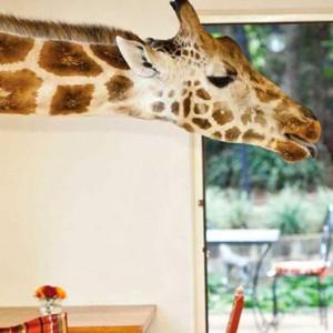 feeding-time-giraffe-manor-luxury-kenyan-honeymoon-packages