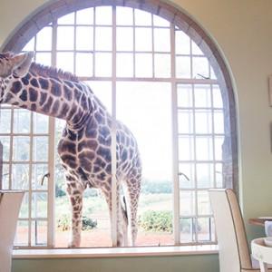 giraffe-breakfast-giraffe-manor-luxury-kenyan-honeymoon-packages