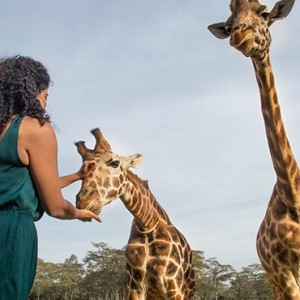 giraffe-feeding-giraffe-manor-luxury-kenyan-honeymoon-packages
