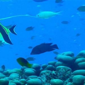 matamanoa-island-resort-fiji-honeymoon-packages-scuba-diving