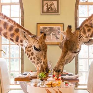 giraffe-dining-giraffe-manor-luxury-kenyan-honeymoon-packages