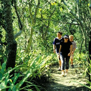 Daydream Island Resort & Spa - Australia Honeymoon Packages - bushwalking