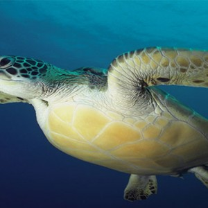 Komandoo Island Resort - Maldives honeymoon packages - marine life - turtles