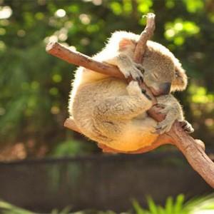 reef-view-hotel-australia-honeymoon-packages-wildlife