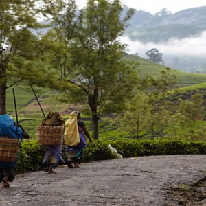 Ceylon Tea Trails - Sri Lanka Honeymoon Packages - tea pickers