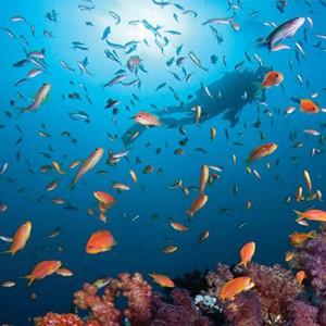Four Seasons Resort Maldives at Kuda Huraa - Maldives Honeymoon Packages - Scuba diving