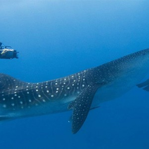 Four Seasons Resorts at Landaa Giraavaru - Maldives Luxury Honeymoon Packages - scuba diving