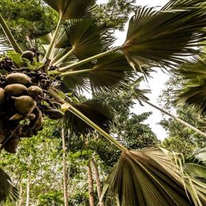 Four Seasons Resort Seychelles - Luxury Seychelles Honeymoon packages - Coconut palm trees