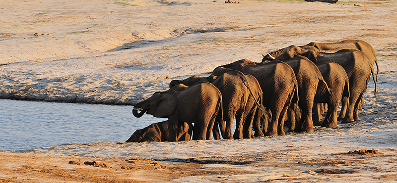 Hwange National Park - Top Safaris for your honeymoon