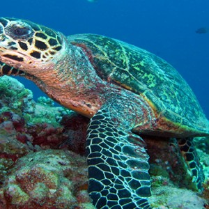Nika Island Resort and Spa - Luxury Maldives Honeymoon Packages - marine life