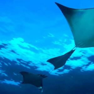 marine life- Dhigali Maldives - Luxury Maldives Honeymoon Packages