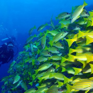 scuba diving - Dhigali Maldives - Luxury Maldives Honeymoon Packages