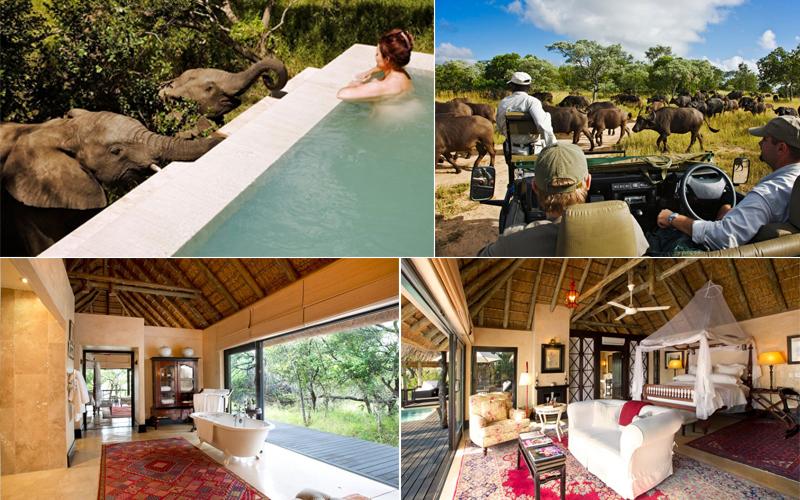 Royal Malewane - top luxury safari lodges in africa - luxury safari honeymoons