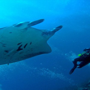 Bandos Maldives - Luxury Maldives honeymoon packages - scuba diving