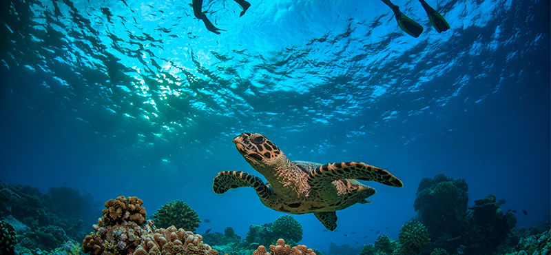 snorkeling - 5 things you must see on your seychelles honeymoon - luxury seychelles honeymoon packages