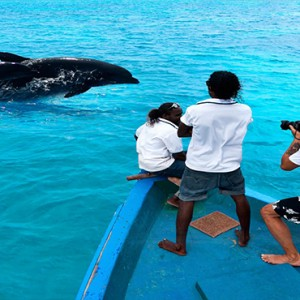 Cocoon Maldives - Luxury Maldives Honeymoon Packages - dolphin watching