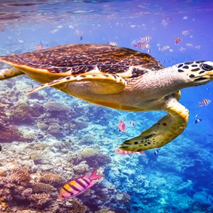 Cocoon Maldives - Luxury Maldives Honeymoon Packages - marine life