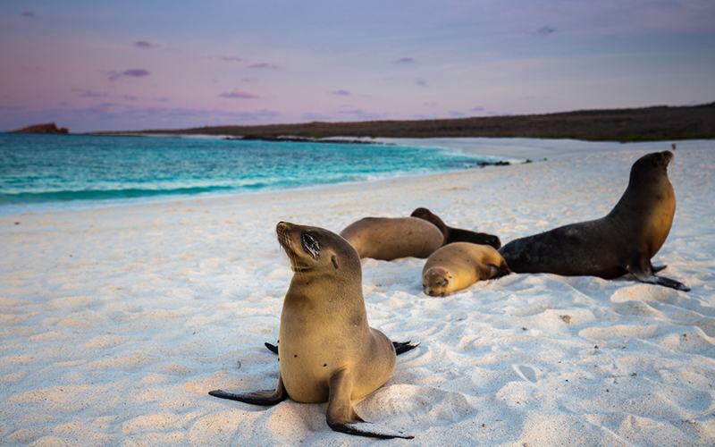 galapagos - Romantic destinations in South America - luxury south america honeymoon packages