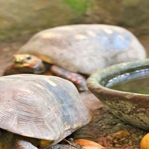 Southfield Estate Resort - Luxury St Lucia honeymoon Packages - tortoises