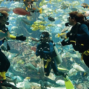 aquarium - Atlantis The Palm dubai - Luxury dubai honeymoon packages