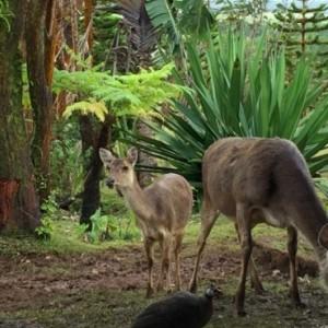 wildlife - Bubble Lodge Mauritius - Luxury Mauritius Honeymoon Packages