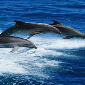 Luxury Mauritius Honeymoon Packages - Lux* Belle Mare - dolphin watching