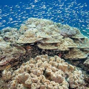 Hurawalhi Island - Luxury Maldives Honeymoon Packages - Coral Reef