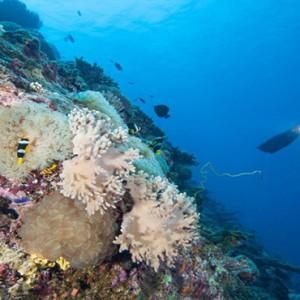 Hurawalhi Island - Luxury Maldives Honeymoon Packages - scuba diving