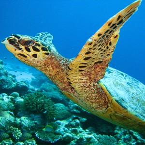 JA Manafaru - Luxury Maldives honeymoon packages - marine life