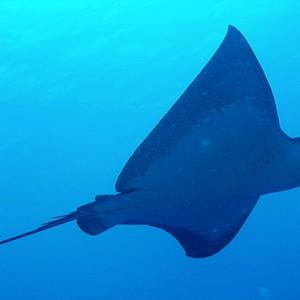 JA Manafaru - Luxury Maldives honeymoon packages - marine life1