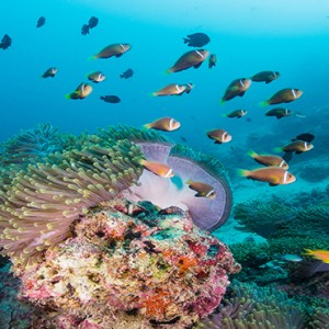 Milaidhoo Island Maldives - Luxury Maldives Honeymoon Packages - House reef