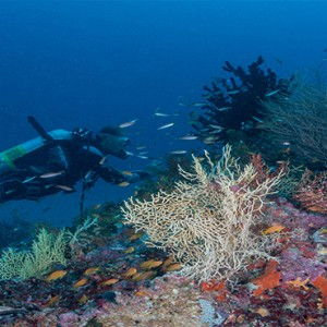 Milaidhoo Island Maldives - Luxury Maldives Honeymoon Packages - Scuba diving