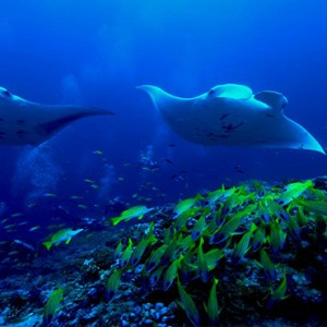 OBLU by Atmosphere at Helengali - Luxury Maldives Honeymoon Packages - Atmosphere Aqua club marine life