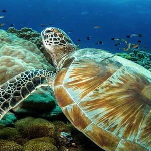 Ozen by Atmosphere at Maadhoo Island - Luxury Maldives Honeymoon Packages - diving marine life