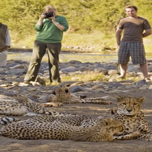 Samara Private Game Reserve - Luxury South Africa Honeymoon Packages - Cheetah walk