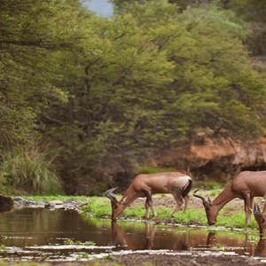 Samara Private Game Reserve - Luxury South Africa Honeymoon Packages - wildlife