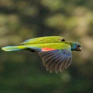 St Lucia Honeymoon Packages Jade Mountain Bird Watching