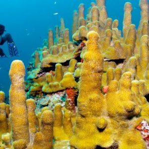 St Lucia Honeymoon Packages Jade Mountain Scuba Diving