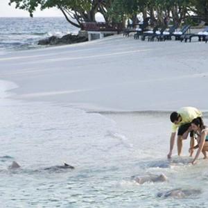 Vivanta By Taj - Coral Reef - Luxury Maldives Honeymoon Packages - Stingray feeding