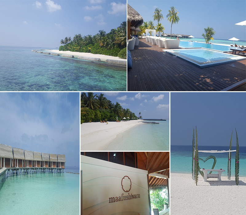 verity sri lanka and maldives fam trip - Maafushivaru maldives