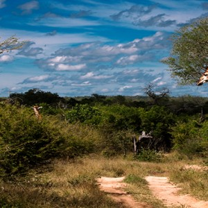 Lion Sands Game Reserve - Luxury South Africa Honeymoon Packages - Safari
