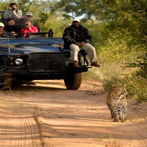 Lion Sands Game Reserve - Luxury South Africa Honeymoon Packages - Safari1