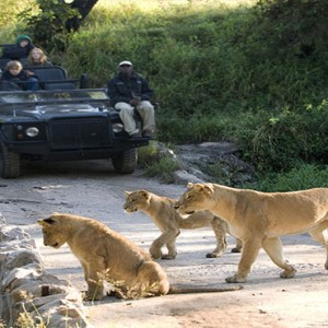 Lion Sands Game Reserve - Luxury South Africa Honeymoon Packages - Safari2
