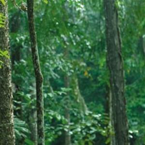 Malaysia Honeymoon Packages Shangri La Rasa Sayang Resort Jungle Walk