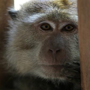 Malaysia Honeymoon Packages The Andaman Langkawi Monkey