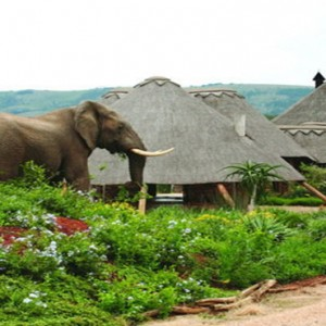 Pumba Private Game reserve - Luxury South Africa Honeymoon Packages - Elephant by lodge