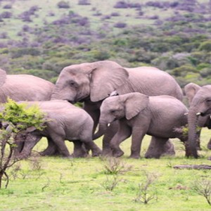 Pumba Private Game reserve - Luxury South Africa Honeymoon Packages - Elephant family