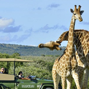 Shamwari Game Reserve - Luxury South Africa Honeymoon Packages - Girraffes